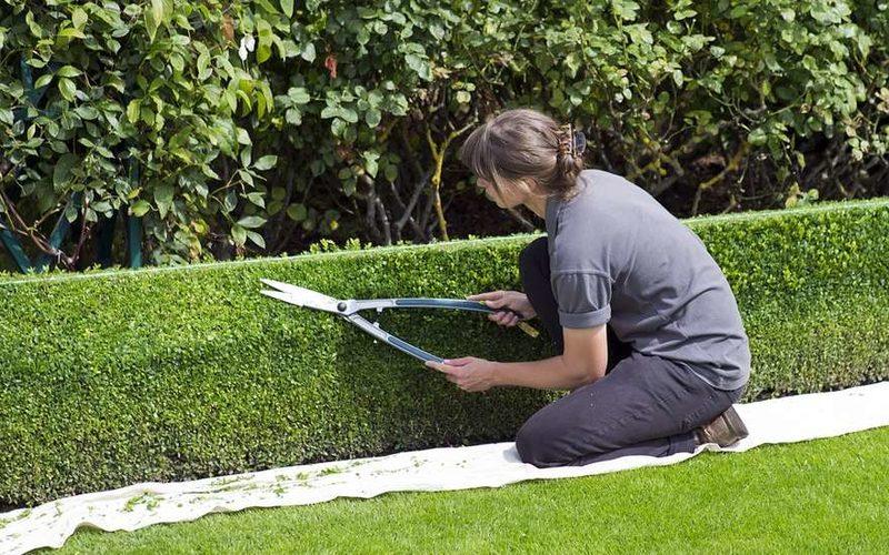 Сколько стоят услуги профессионального садовника