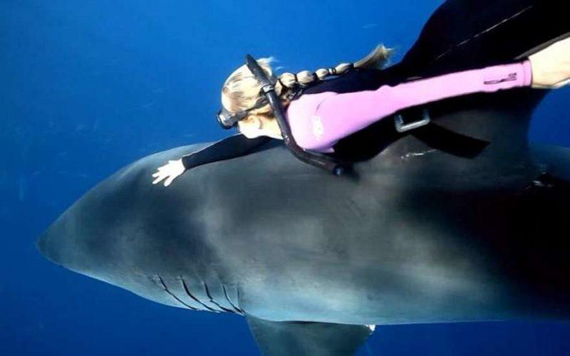 белой акулы и человека