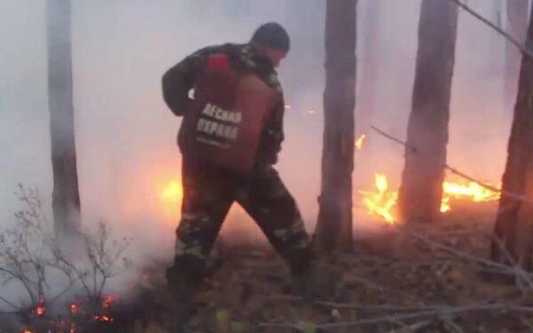 лесные пожары бушуют САО