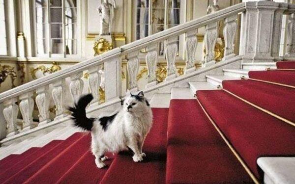 Всемирный день петербургских кошек и котов в 10-й раз отмечают в Петербурге