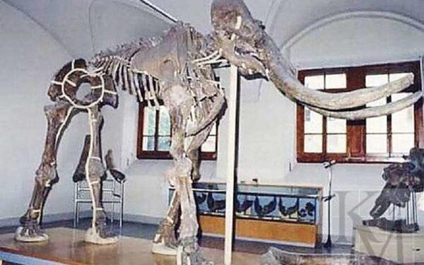Нашли останки древнего хоботного