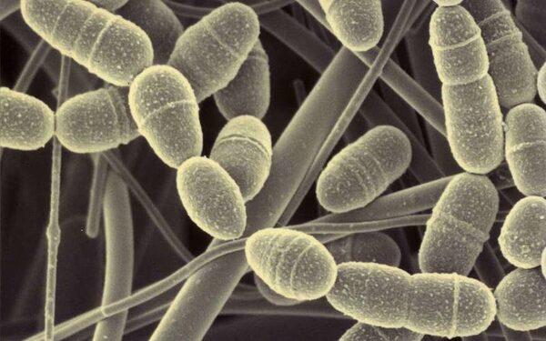 В США создади антибиотик, против которого бактерии бессильны
