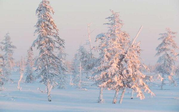 Дальний Восток, происшествия, новости сегодня 27 января, главною за сутки, самое интересное: Владивосток, Комсомольск-на-Амуре, Хабаровск, Благовещенск, Южно-Сахалинск, Якутск ФОТО