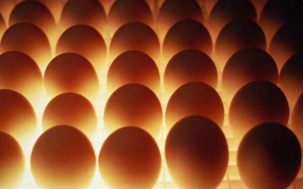 Украина запретила транзит турецких яиц в Россию