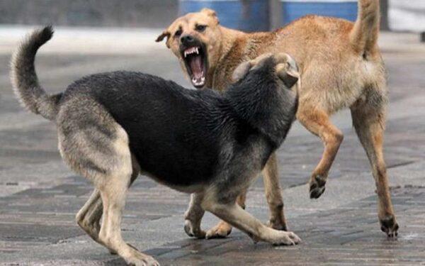 В Бердске стая собак до полусмерти загрызла мужчину, сняв с него скальп