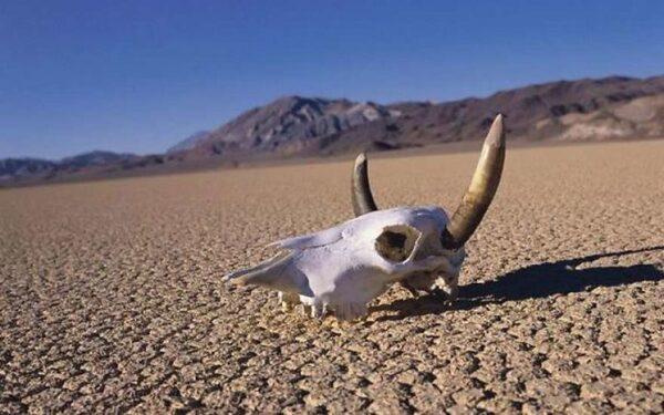 Из-за мощной засухи США превратится в пустыню