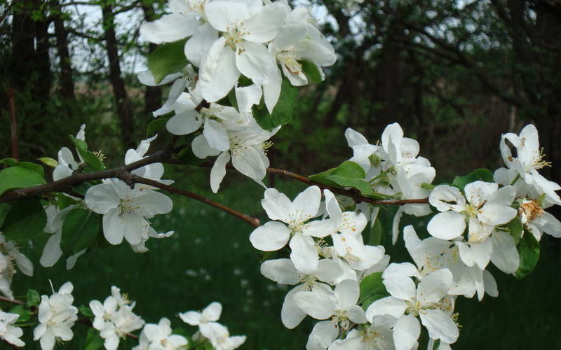 С первым днем весны (1 марта): прикольные картинки, стихи короткие, смс