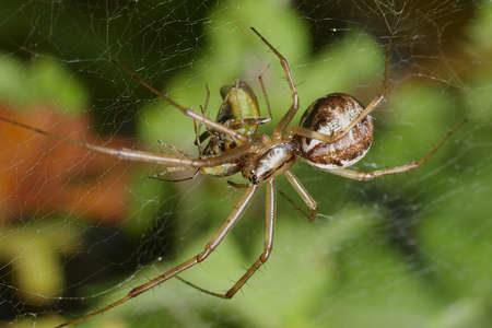 Паук плетет паутину