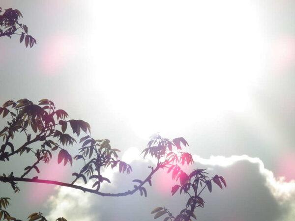 День летнего солнцестояния в 2017 году — традиции и обряды