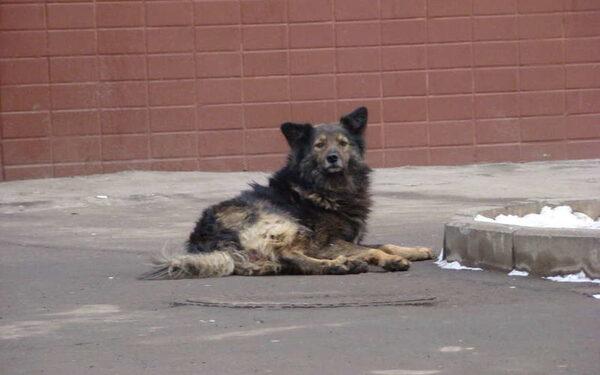 В России сегодня день охоты на собак: чем травят, как спасти питомца, мнения