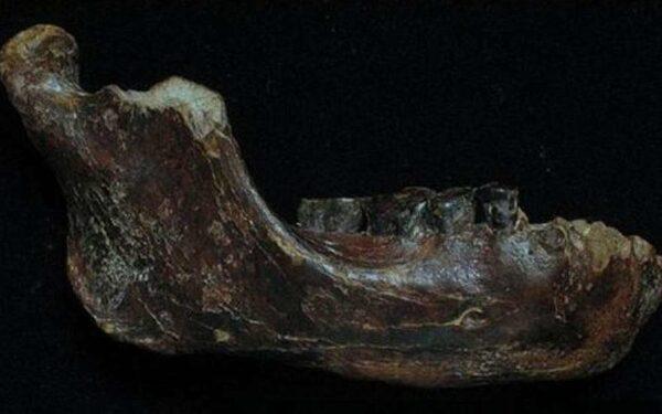 Челюсть древнего человека найдена у побережья Тайваня