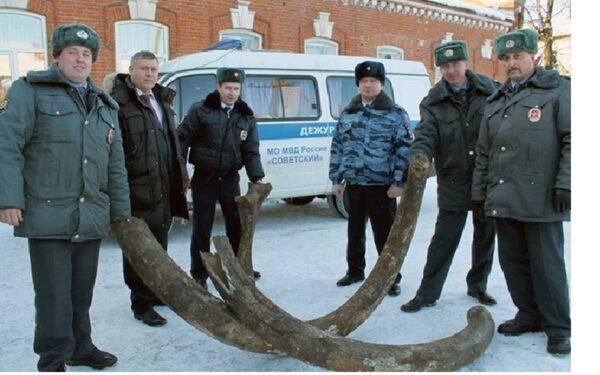 В Кировской области  мужчина сдал в полицию бивни и кости мамонта
