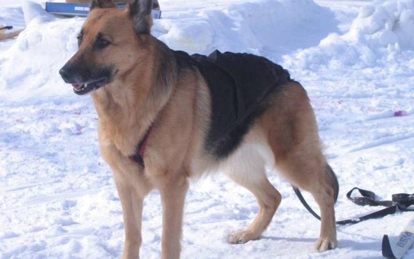 Пропавшего ребенка на Кубани нашла служебная собака овчарка