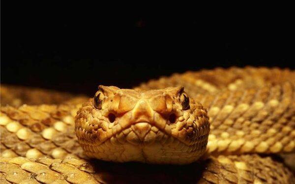 древнейшие змеи были с конечностями и питались динозаврами