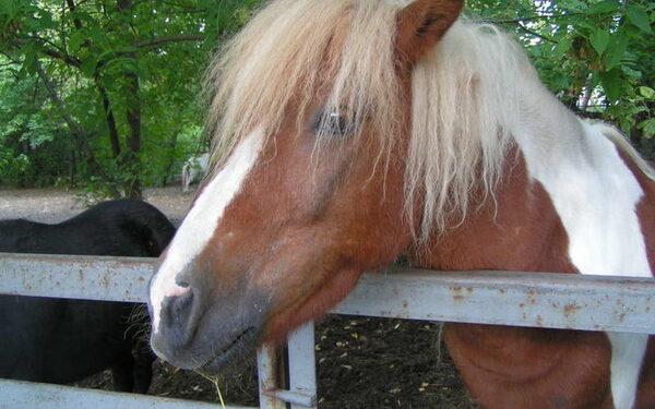 На Алтае поскользнувшаяся лошадь насмерть задавила 28-летнюю девушку